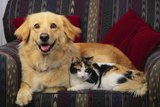 Dog and Cat Sitting in a Chair Photographic Print by  DLILLC