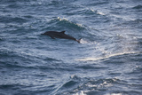 Bottlenose Dolphin Photographic Print by  DLILLC