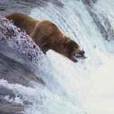 Brown Bear Catching Salmon Photographic Print by  DLILLC
