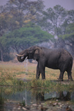 African Elephant Drinking from Watering Hole Photographic Print by  DLILLC