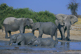 African Elephant Bathing in Watering Hole Photographic Print by  DLILLC