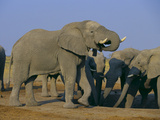 African Elephant Herd at Watering Hole Photographic Print by  DLILLC