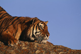 Bengal Tiger Resting on Rocks Photographic Print by  DLILLC