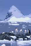 Gentoo Penguin Photographic Print by  DLILLC