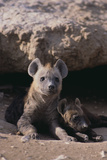 Young Spotted Hyenas Photographic Print by  DLILLC