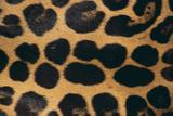 Jaguar Fur Photographic Print by  DLILLC