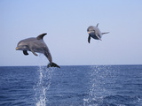Dolphin Breaching the Oceans Surface Photographic Print by  DLILLC