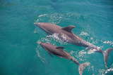 Dolphins Photographic Print by  DLILLC