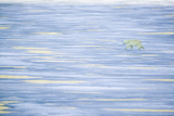 Polar Bear on a Sea of Ice Photographic Print by  DLILLC