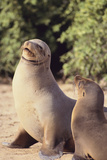 Galapagos Sea Lion Photographic Print by  DLILLC