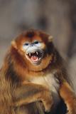 Blue Monkey Photographic Print by  DLILLC