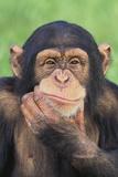 Chimpanzee Smiling Fotografisk tryk af  DLILLC
