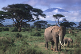 Elephant and Calf in Amboseli National Park Photographic Print by  DLILLC