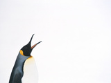 King Penguin Photographic Print by  DLILLC
