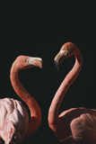 Two Flamingoes Photographic Print by  DLILLC