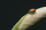 Ladybug Photographic Print by  DLILLC