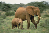 African Elephant with Calf Photographic Print by  DLILLC