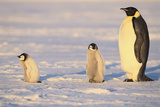 Emperor Penguin and Young Photographic Print by  DLILLC