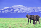African Elephants near Mount Kilimanjaro Photographic Print by  DLILLC