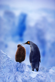 King Penguin with Chick Photographic Print by  DLILLC