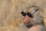 Baboon in Sunglasses Photographic Print by  DLILLC
