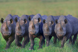 Rhinos Side by Side Photographic Print by  DLILLC