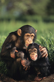 Happy Chimpanzee Family Photographic Print by  DLILLC