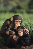 Happy Chimpanzee Family Photographic Print by  DLILLC