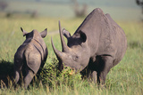 Black Rhinoceros Photographic Print by  DLILLC