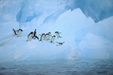Adelie Penguins Jumping in the Sea Photographic Print by  DLILLC