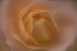 Soft Focus Orange Rose Photographic Print by Kathleen Clemons