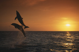 Dolphins Leaping from Water Photographic Print by  DLILLC