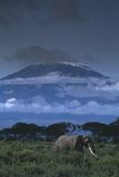 Elephant near Mount Kilimanjaro Photographic Print by  DLILLC