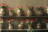 Petunias in Pots Photographic Print by  DLILLC