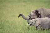 African Elephants with Trunks Raised Photographic Print by  DLILLC