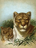 Mother Lion with Cubs Photographic Print