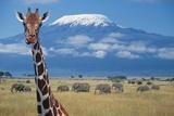Giraffe and Elephants near Mount Kilimanjaro Fotografisk tryk af  DLILLC