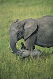 Adult Elephant and Calf Photographic Print by  DLILLC