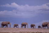 Herd of Elephants Photographic Print by  DLILLC
