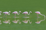 Flamingoes Photographic Print by  DLILLC