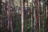 Orangutan in the Jungle of Borneo Photographic Print by  DLILLC