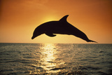 Dolphin Leaping from Water Photographic Print by  DLILLC