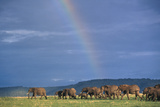 Herd of Elephants Crossing Savanna at the Masai Mara National Reserve Photographic Print by  DLILLC
