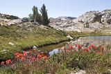 Usa, California, Yosemite National Park, General Views with Indian Paintbrush Flowers in Foreground Photographic Print by Paul Whitfield