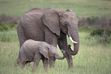 Young Elephant with Mother in Field Photographic Print by  DLILLC