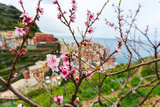 Spring Blooming Cherry Tree with Background Scenic View of Colorful Houses of Manarola Village, Cin Photographic Print by BlueOrange Studio