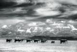 Herd of Elephants on the African Plains Fotografisk tryk af DLILLC