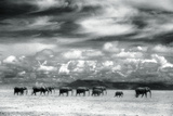 Herd of Elephants on the African Plains Lámina fotográfica por  DLILLC
