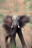 Charging Elephant Photographic Print by  DLILLC