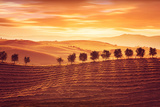 Beautiful Countryside Landscape, Amazing Orange Sunset over Golden Soil Hills, Beauty of Nature, Ag Photographic Print by Anna Omelchenko